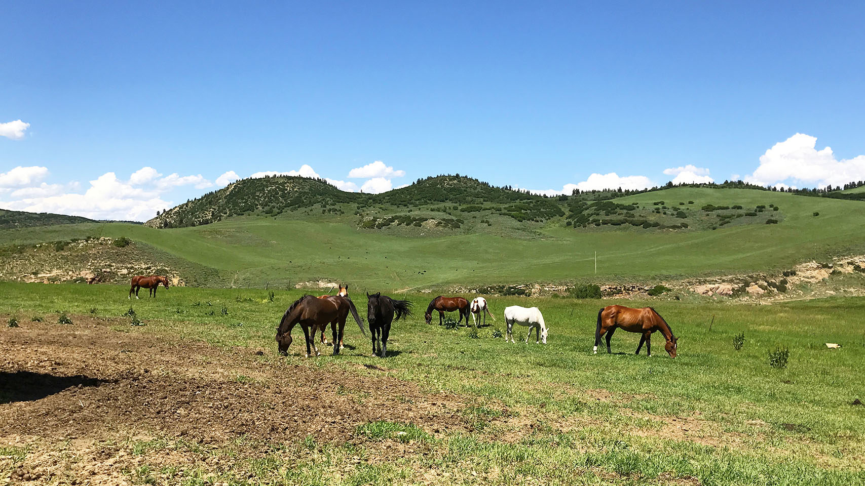 Routt County Horse Rescue.org